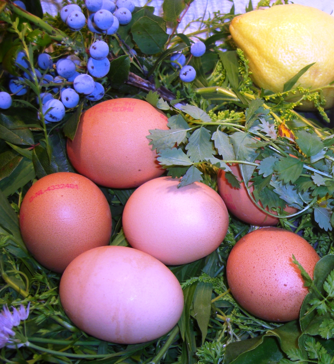 Eier zur Osterzeit Magazin