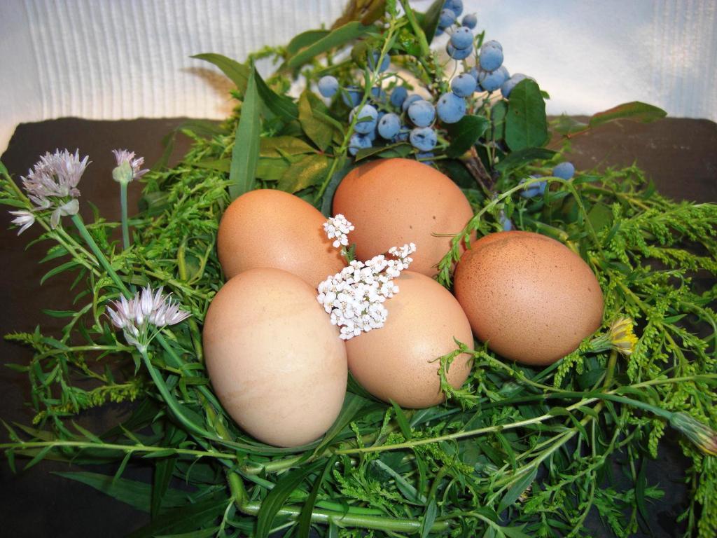 Info das Gelbe vom Ei NestBIG