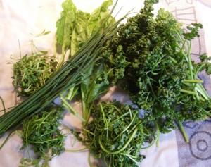 Kräuter für Grüne Sauce